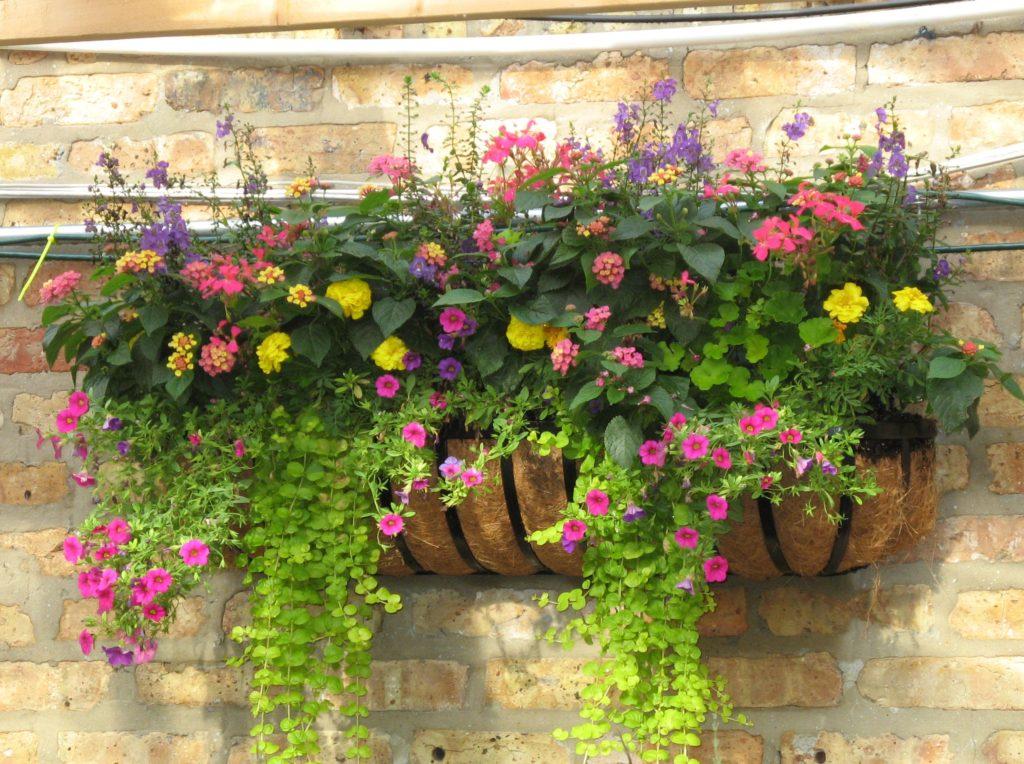 Container gardens landscape gardens boise idaho for Landscape design boise