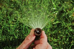 sprinkler head | farwest landscape